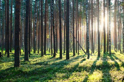 Gadis Berjilbab Ditemukan Nyaris Telanjang di Hutan Pinus, Dicekoki Miras dan Diduga Disetubuhi 2 Teman Prianya
