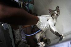Kapan Kucing Harus Divaksin? Berikut Ini Panduannya
