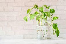 10 Tanaman Hias yang Cocok untuk Rumah Minimalis