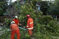 2 Pohon Tumbang Saat Hujan yang Disertai Angin di Cakung