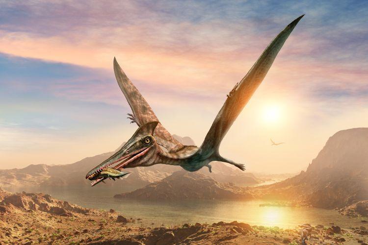 Ilustrasi pterosaurus, spesies reptil terbang dari zaman dinosaurus. Potongan fosil di Maroko mengungkap spesies pterosaurus kecil.