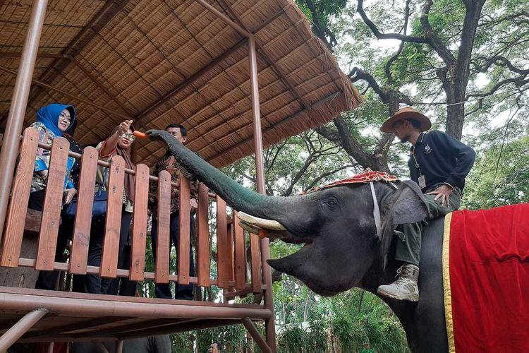 Pertunjukan atraksi gajah di Kebun Binatang Surabaya.
