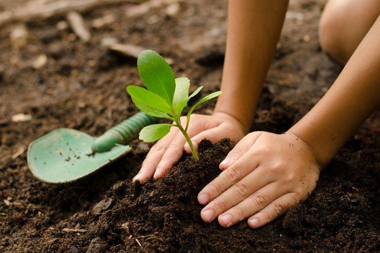 Ilustrasi menanam pohon.
