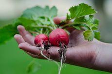 6 Tips Mulai Berkebun Sayuran di Rumah, Panduan buat Pemula