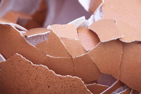 Cara Membuat dan Mengaplikasikan Pupuk Cair dari Cangkang Telur
