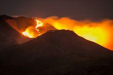 Kebakaran Gunung Merbabu Hanguskan Sebagian Ekosistem Bunga Edelweis