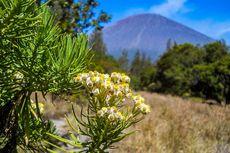 7 Gunung Ini Punya Pemandangan Edelweiss yang Indah, tapi Tidak untuk Dipetik