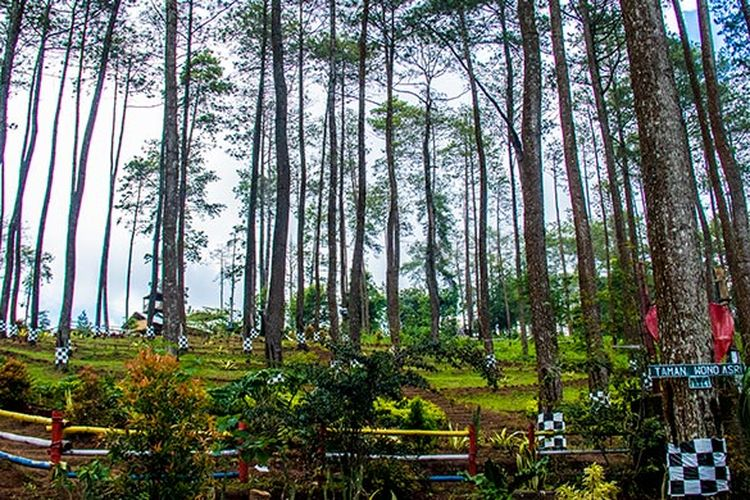 Hutan Wisata Wonoasri Seper (WNS), Wonogiri