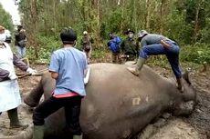 Gajah Sumatera Berusia 40 Tahun Ditemukan Mati di Bengkalis, Riau