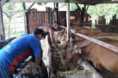 Begini Upaya Budiono, Pelaku UMKM Sektor Perikanan dan Peternakan, Penuhi Kebutuhan Pangan di Timur Indonesia