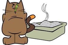 Manfaat Ganda Pasir Silika Kucing, Bisa Digunakan untuk Menghilangkan Bau Apek Lemari