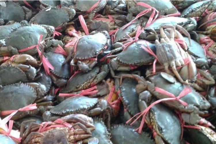 Ribuan kepiting yang akan di selundupkan ke Tawau Malaysia oleh nelayan tak bertanggung jawab  bulan maret lalu. Banyakny nelayan  Philipina di perairan perbatasan Indonesia dikeluhkan nelayan di Kabupaten Nunukan. Puluhan Nelayan tersebut menyaru sebagai nelayan Indonesia.