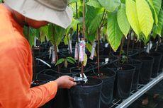 Pusat Penelitian Kakao Global Dibuka di Pasuruan