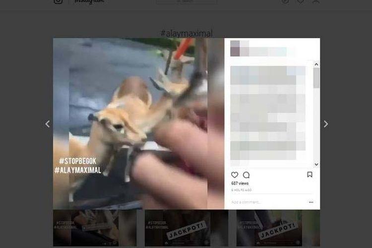Sebuah video yang mempertontonkan kejahilan sejumlah pengunjung saat berada di Taman Safari Indonesia, Puncak, Bogor, Jawa Barat, viral dan membuat geram netizen pengguna media sosial Instagram. Di video ini, pengunjung menuangkan minuman dalam botol ke mulut rusa sehingga membuatnya kabur.