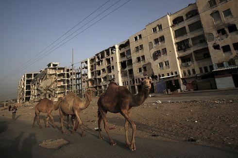 Ribuan Unta Serbu Jalanan Usai Serangan Udara di Pelabuhan Tripoli, Libya