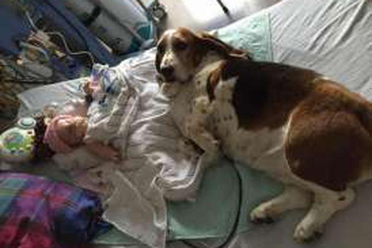 Anjing ini menunggui Nora saat bayi lima bulan itu mengembuskan napas terakhirnya.