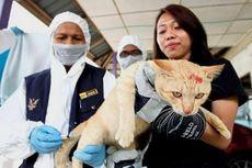 Malaysia Tuding Indonesia soal Wabah Rabies di Serawak