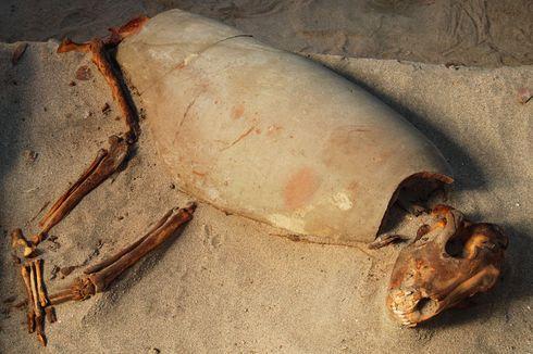 Kuburan Peliharaan Tertua di Dunia Ada di Mesir, Ada 600 Kerangka Kucing dan Anjing