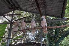 16 Ekor Burung Kakatua Disita dari Tangan Warga di Sulawesi Utara
