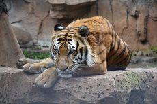 Kebun Binatang Bandung Kembali Buka Mulai Sabtu, Harga Tiket Tak Naik