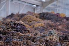 KKP Bantu Permodalan Pembudi Daya Rumput Laut di Sulsel