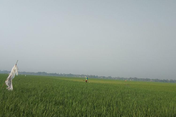 Sawah di Desa Malangsari, Kecamatan Pedes, Kabupaten Karawang.