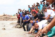 Jaga Kelestarian, 80 Ekor Tukik Dilepas Liarkan di Pantai Napau
