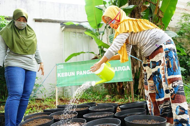 Dompet Dhuafa bersama warga masyarakat di sejumlah titik dan kota, menghadirkan program Kebun Pangan Keluarga dengan memanfaatkan lahan di sekitar tempat tinggalnya.