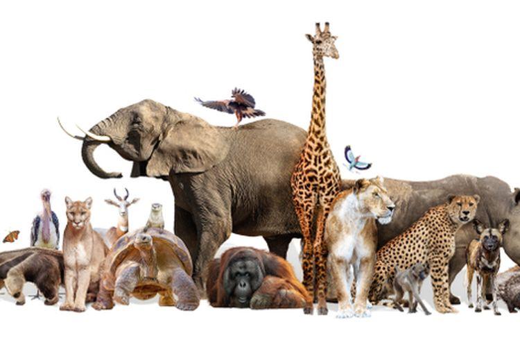 Ilustrasi hewan, binatang
