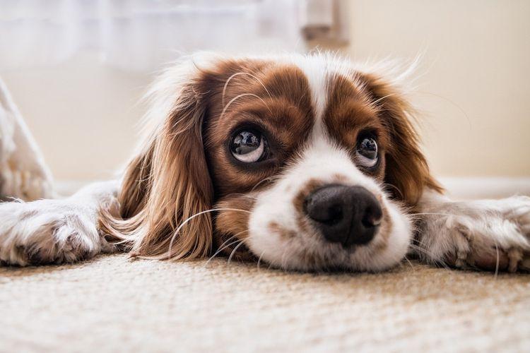 Ilustrasi anjing sahabat anak