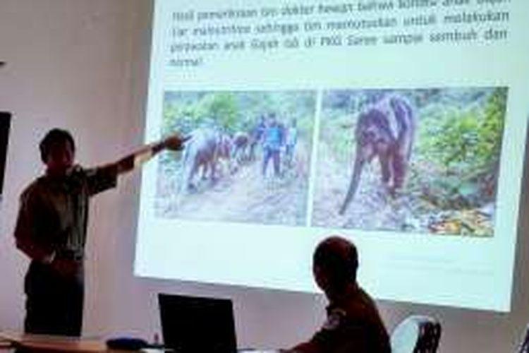 Kepala BKSDA Aceh Sapto Ari Prabowo menunjukkan photo seekor anak gajah jantan dalam kondisi mal nutrisi dan kini anak gajah tersebut dievakuasi ke PKG Saree Aceh Besar untuk mendapat perawatan intensif.