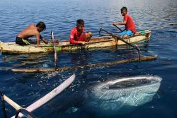 Kevin (12) dan 2 temannya memberi makan hiu paus di Desa Batumarani, Kabila Bone, Kabupaten Bone Bolango, Gorontalo. Hiu paus ini sangat jinak dan biasa bermain dengan anak-anak nelayan.