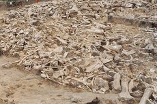 Manusia Purba Buat Lingkaran dari Tulang Mammoth, Apa Fungsinya?