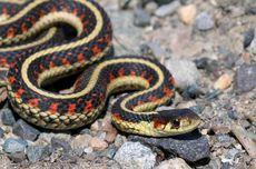 6 Fakta Menarik Hewan Reptil, Muncul 315 Juta Tahun yang Lalu