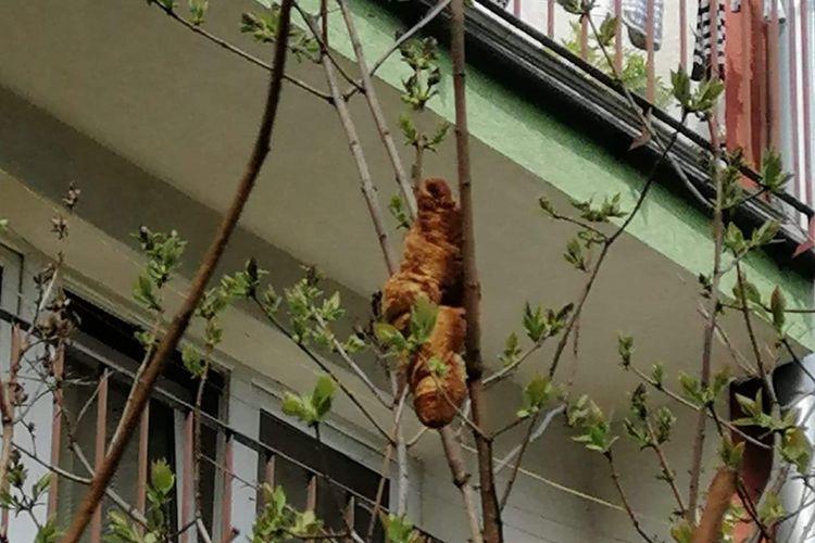 Croissant yang sempat diduga makhluk aneh seperti iguana dan burung pemangsa oleh warga Krakow, Polandia, pada Rabu (14/4/2021).
