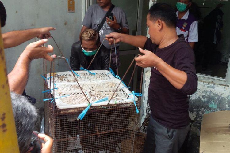 Petugas melakukan pembiusan terhadap kelelawar untuk mencegah penyebaran virus corona di Pasar Depok Solo, Jawa Tengah, Sabtu (14/3/2020).
