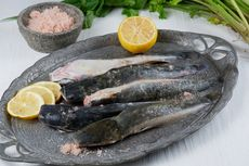 5 Cara Olah Ikan Lele agar Tidak Bau Amis dan Berlendir