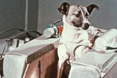Hari Ini dalam Sejarah: Uni Soviet Kirim Anjing Jadi