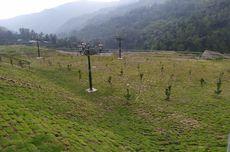 Tak Dibiarkan Gundul, Bendungan Tukul Pacitan Ditanami 655 Pohon
