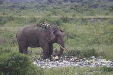 Buat Terenyuh, Gajah Mengais Sisa-sisa Makanan dari Sampah