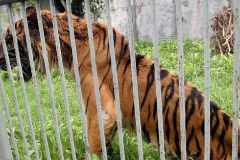 Masalah Kebun Binatang Surabaya Dilaporkan ke Presiden SBY