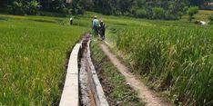 Kekeringan Melanda Sukabumi, Petani di Sana Diimbau Mentan Ikuti Asuransi