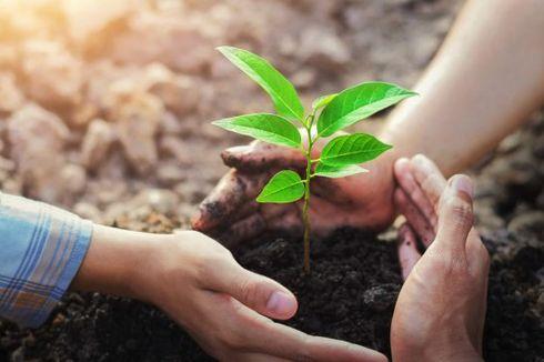 Intip Cara yang Benar Menanam Pohon di Rumah