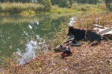 Anjing Ini Duduk di Tepi Danau Tempat Pemiliknya Jatuh dan Tenggelam