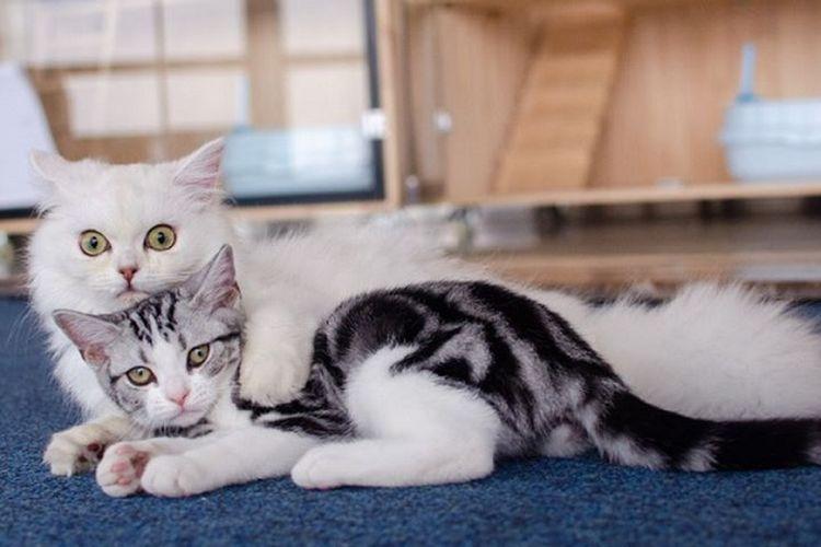 Kucing-kucing ini bertugas sebagai pemberi rasa nyaman bagi para pembaca yang kesepian di sebuah perpustakaan di China.