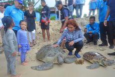 Menteri Susi Lepasliarkan Penyu dan Ikan Napoleon di Perairan Natuna