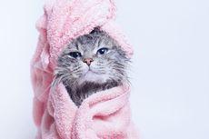 Tips Memandikan Kucing Takut Air secara Aman agar Bebas dari Cakaran