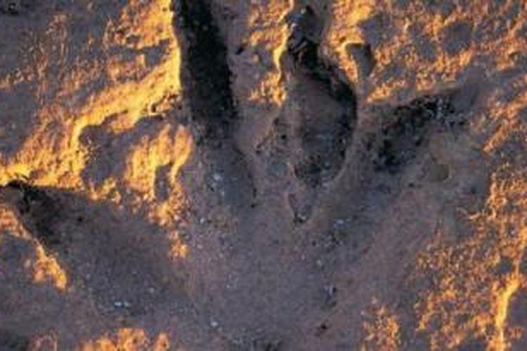 Di bagian barat Australia, misalnya. Tepatnya di Gantheaume Point, wisatawan dapat melihat jejak kaki dinosaurus yang diperkirakan sudah berusia 130 juta tahun.