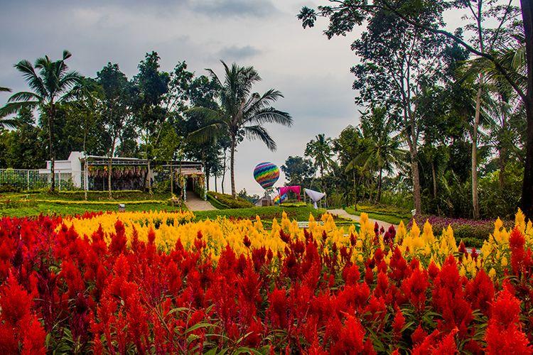 Taman Bunga Alamanda di Sleman, Yogyakarta.