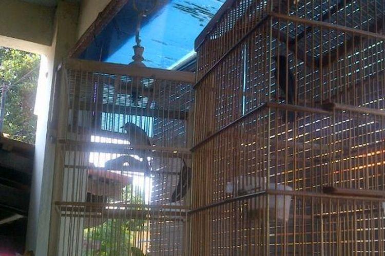 Ilustrasi pencurian burung